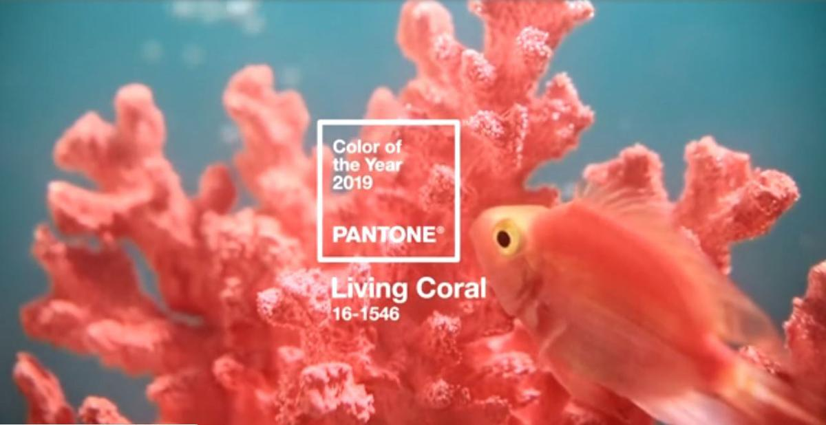 Are you in Living Coral? Pantone announces 2019 Color of the Year