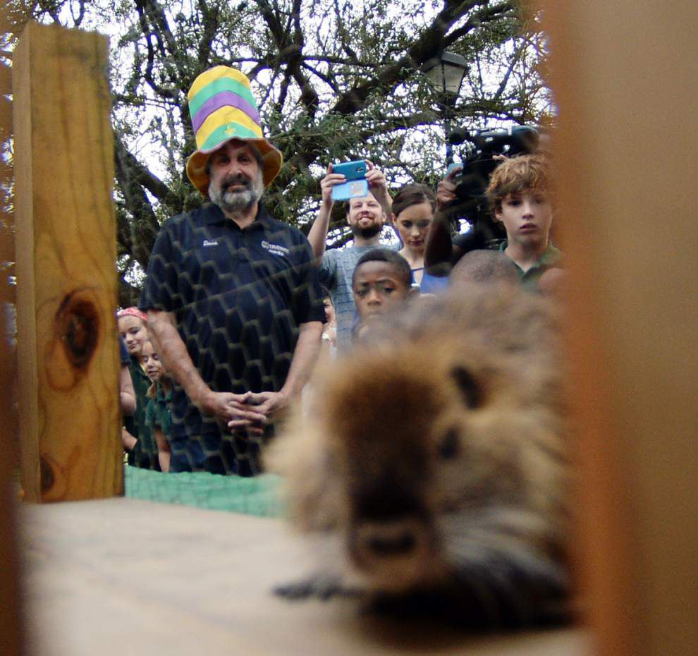 'Cajun Groundhog' joins fellow rodents in calling for early spring _lowres
