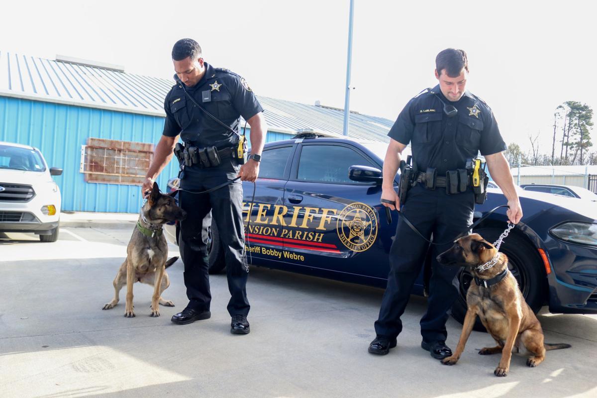 BR.policedogs.adv.05.jpg