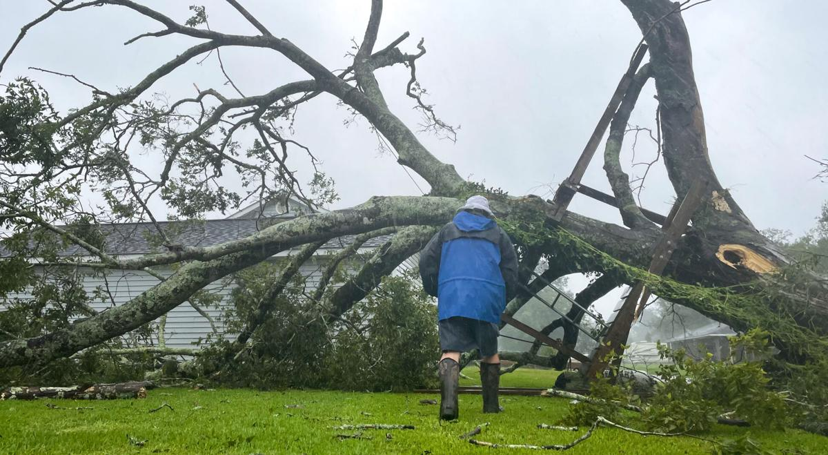 tree down (copy)