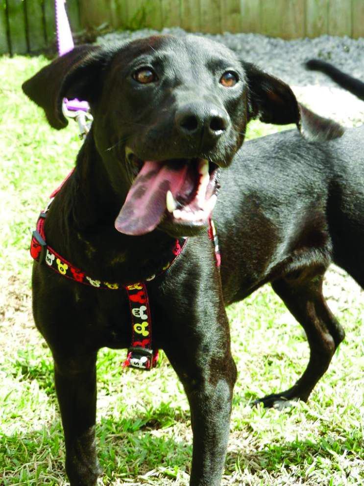 Animal Rescue: Loud fireworks, festivities can be stressful for pets _lowres