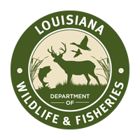 Louisiana hunting, fishing license sales unavailable at retail stores for next two months, LDWF says
