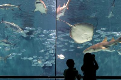Aquarium reopeons to crowd *** Attraction shows off new, surviving stock _lowres