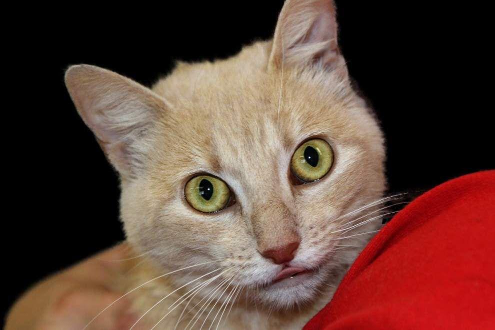 Livingston-Tangipahoa pets available for Feb. 19, 2015 _lowres