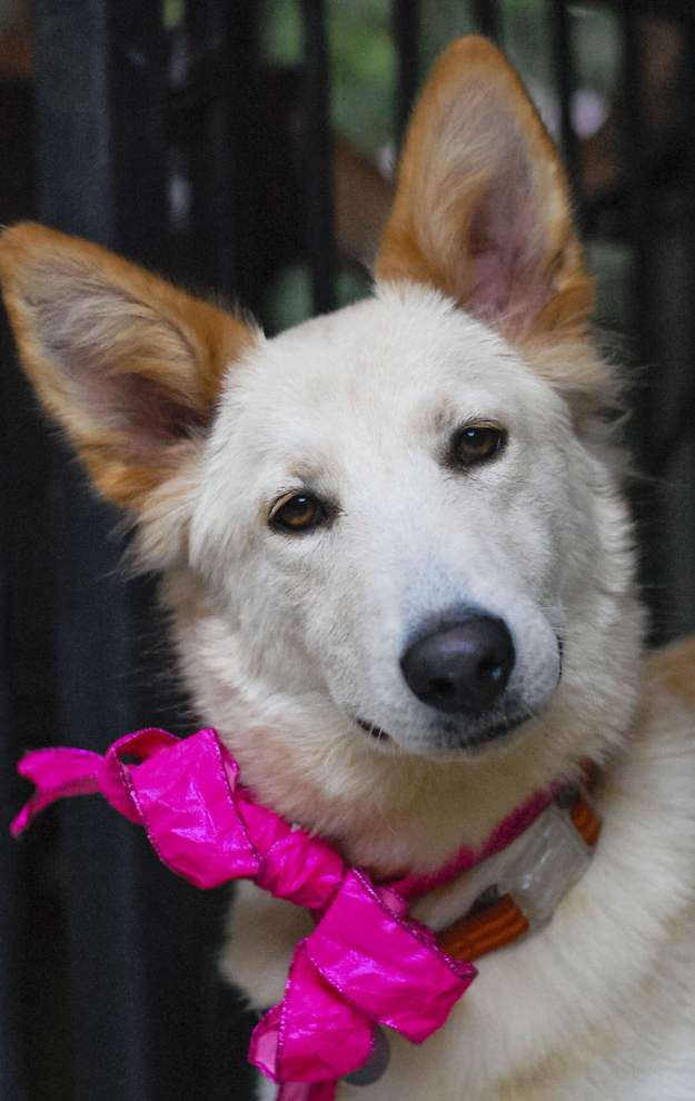 Mid City dogs available for Oct. 29, 2015 _lowres