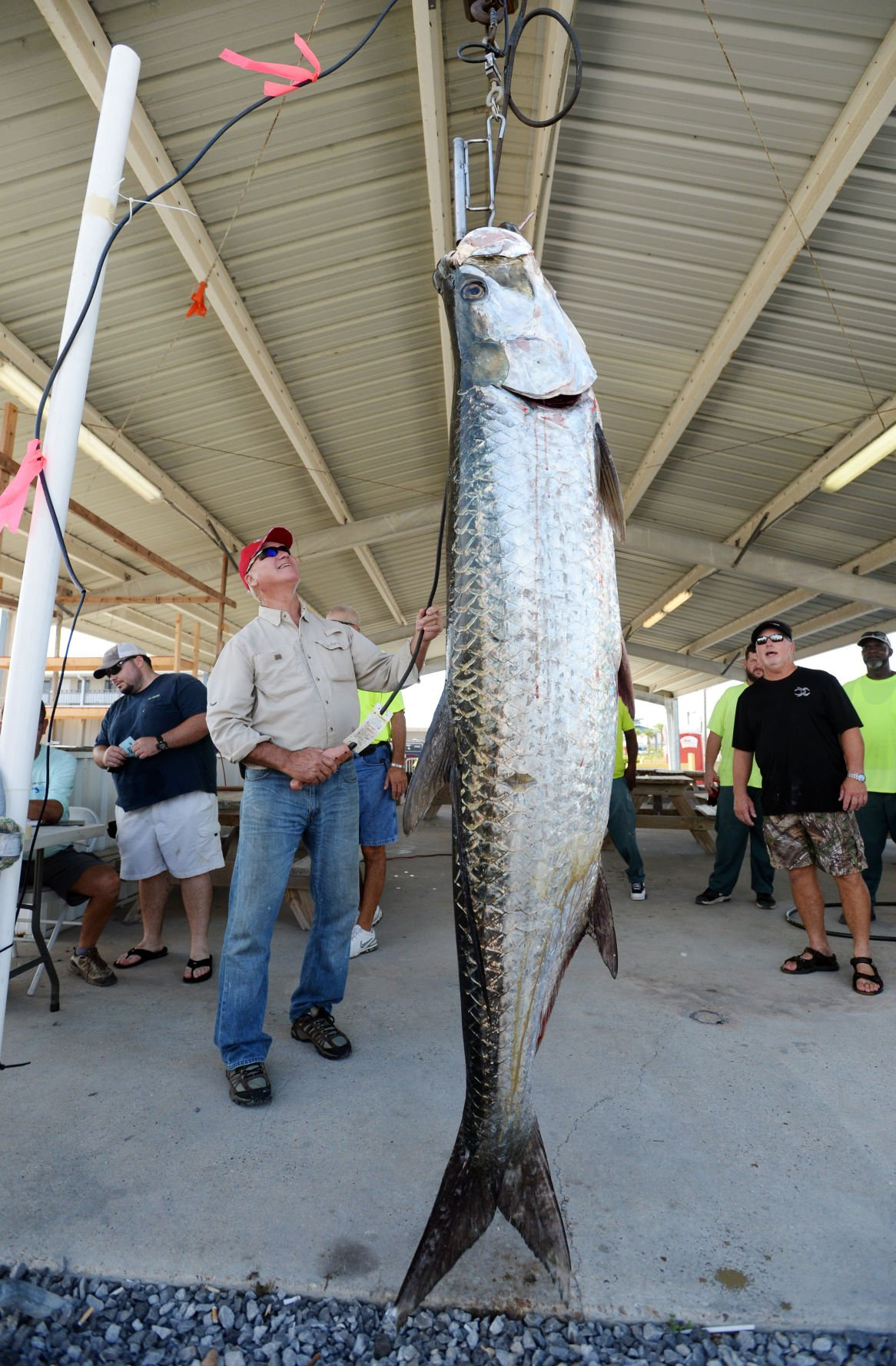 Houma man catches giant 167 pound tarpon in first hours of grand houma man catches giant 167 pound tarpon in first hours of grand isle tarpon rodeo news theadvocate nvjuhfo Images