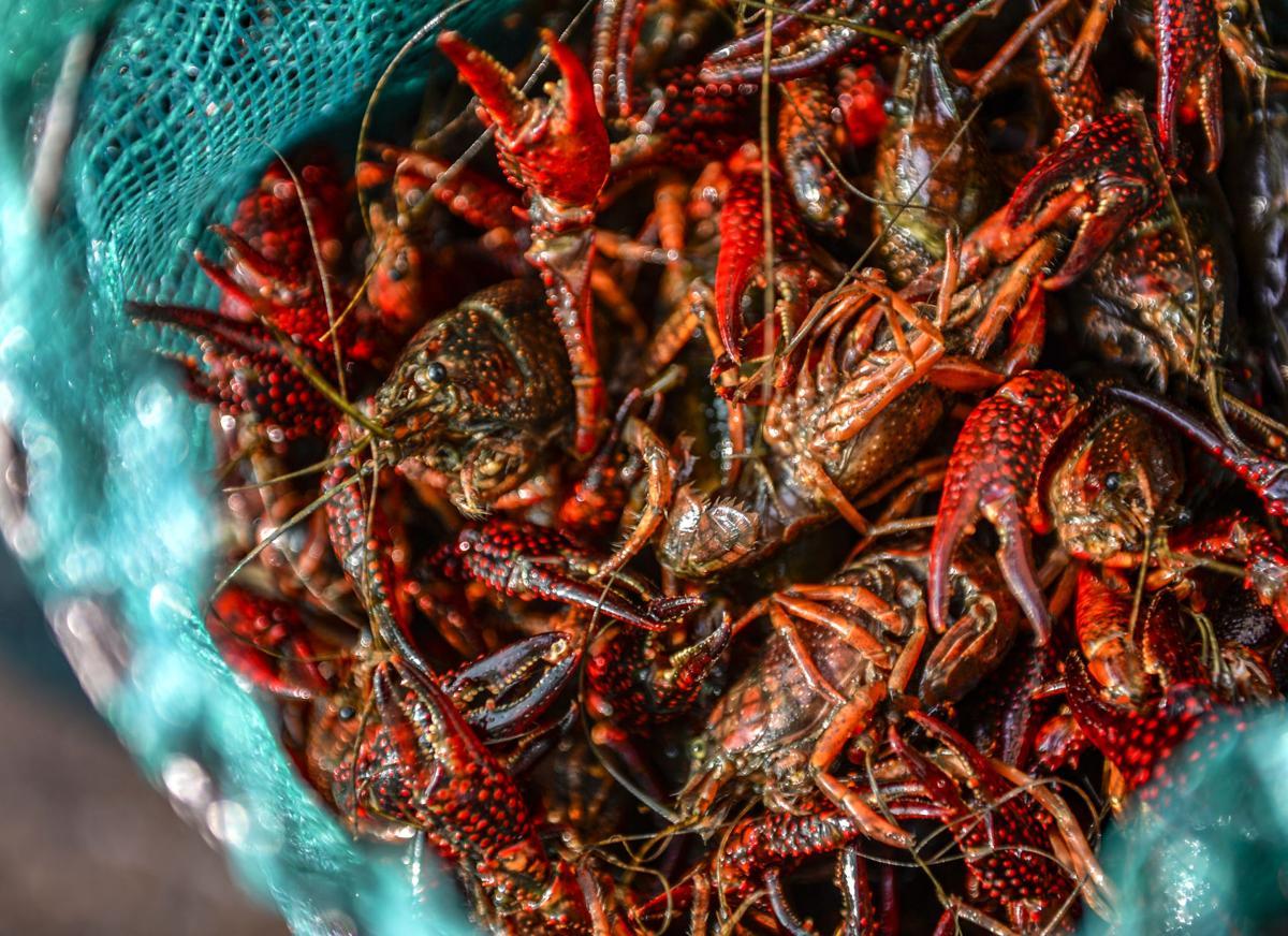 Crawfish file