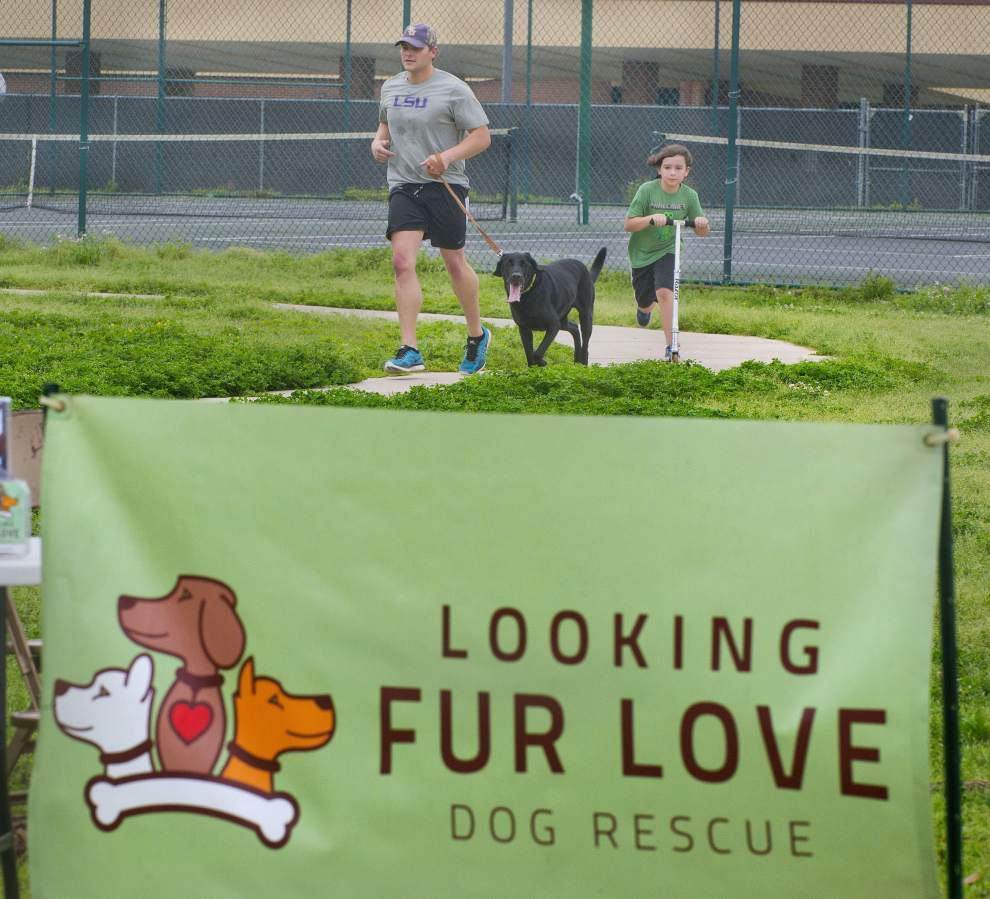 'Pawsome' run benefits Looking Fur Love canine organization _lowres