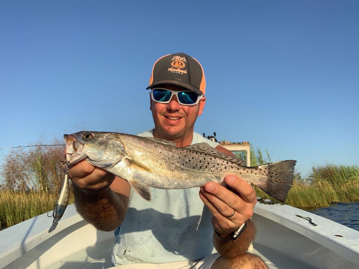 Single trout