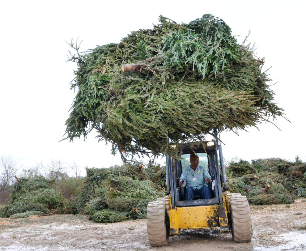 Around Jefferson: Christmas tree recycling begins on Jan. 7 _lowres