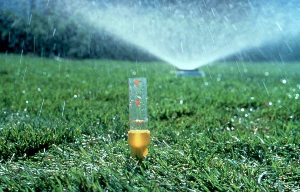 Garden News: Excessive water hurtful to landscape plants _lowres