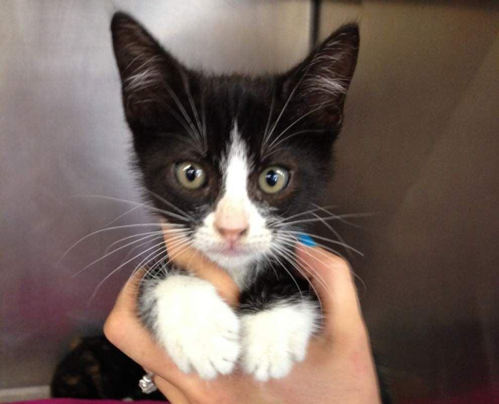 Livingston-Tangipahoa pets available for July 10, 2014 _lowres