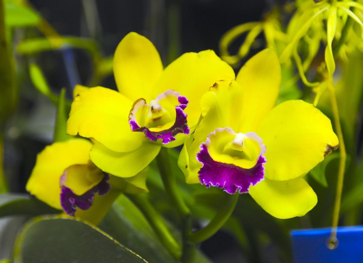 orchidshow (copy)