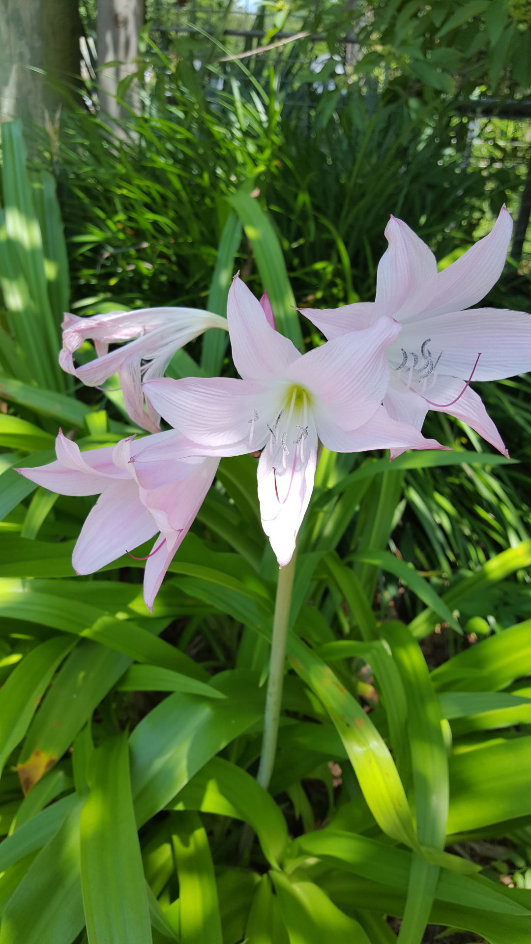 Flowers and plants: a selection of news