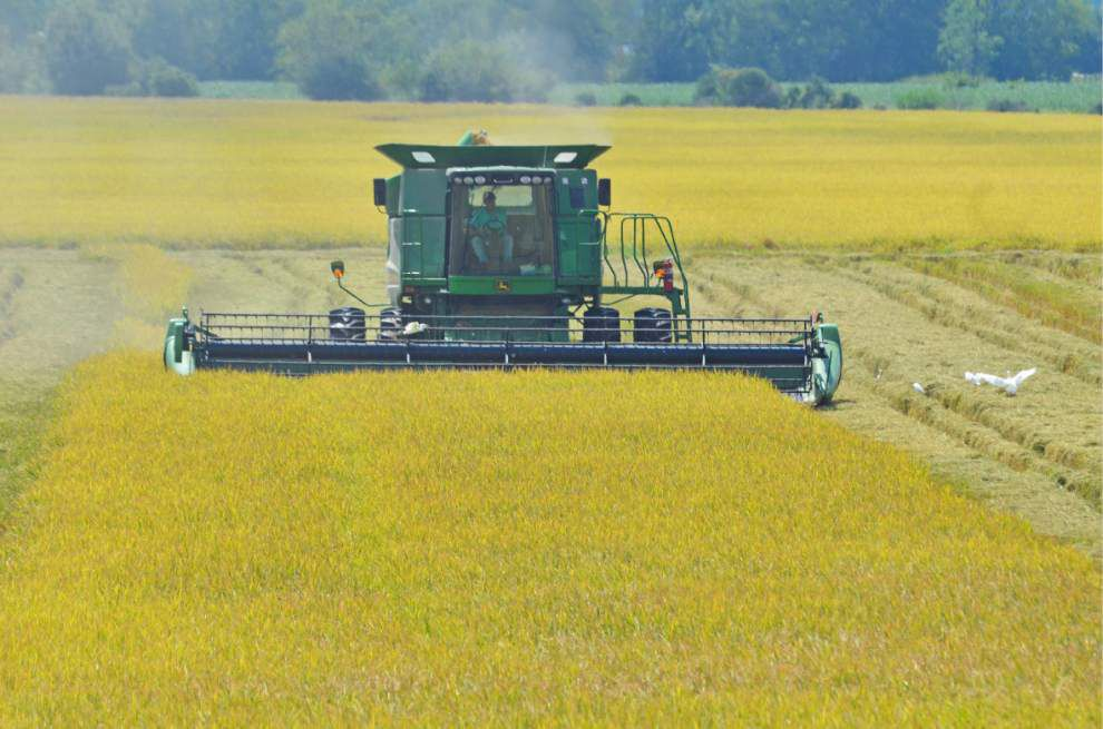 Rice harvesting progressing in Louisiana, but yields are down _lowres