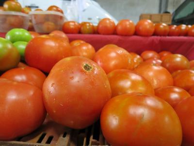 tomato1.jpg _lowres