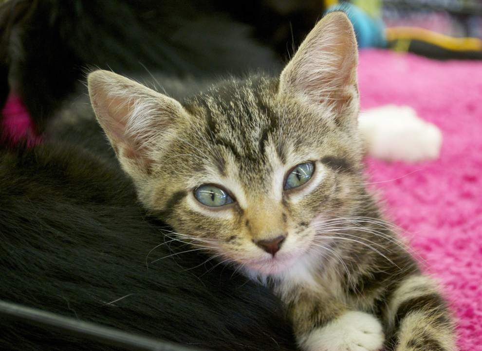 Southeast cats available for Nov. 13, 2014 _lowres