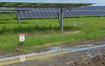 BR.solarfarm.061120. 0010 bf.JPG