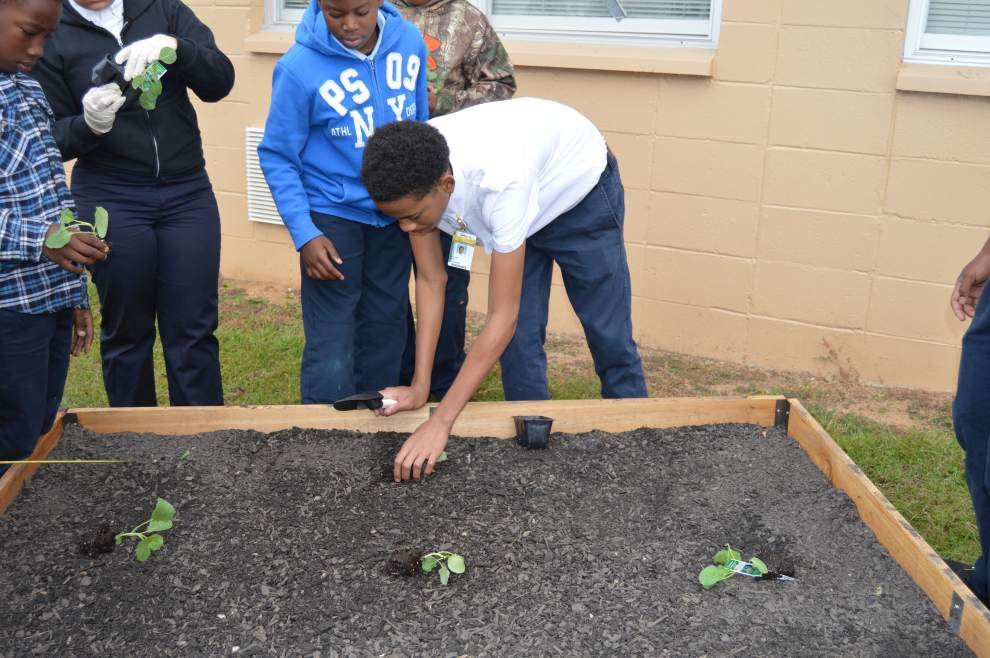 Model school garden debuts at St. Helena with native plants _lowres