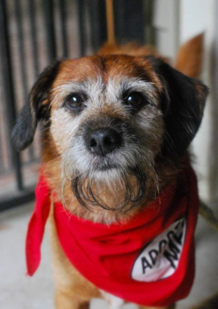 Southside pets available for July 24, 2014 _lowres