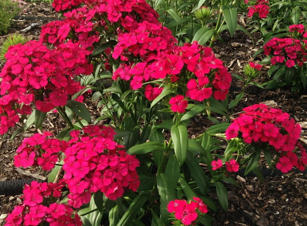 Plant Set For March 23 Home Garden Theadvocate