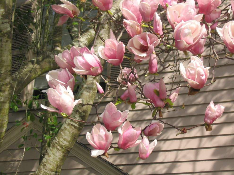 Garden news: More 'plant confusion' than normal this year _lowres