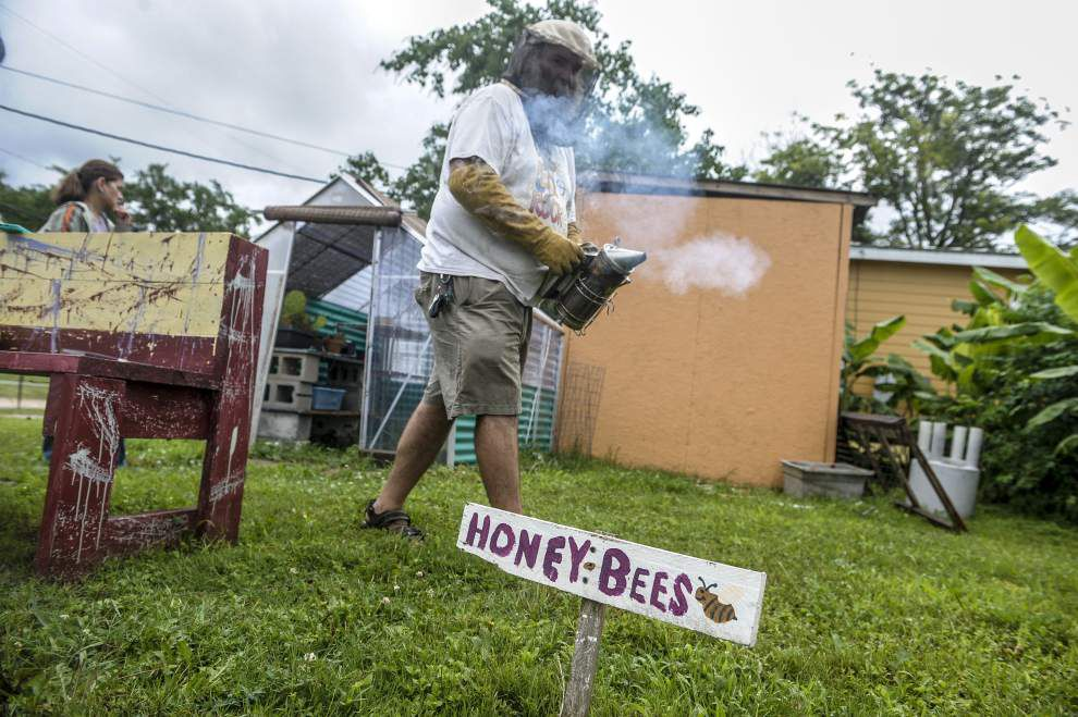 Bee whisperer brings sweet harvest to Lower Ninth Ward _lowres
