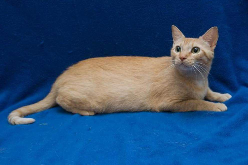 Cats available for Oct. 2, 2014 _lowres