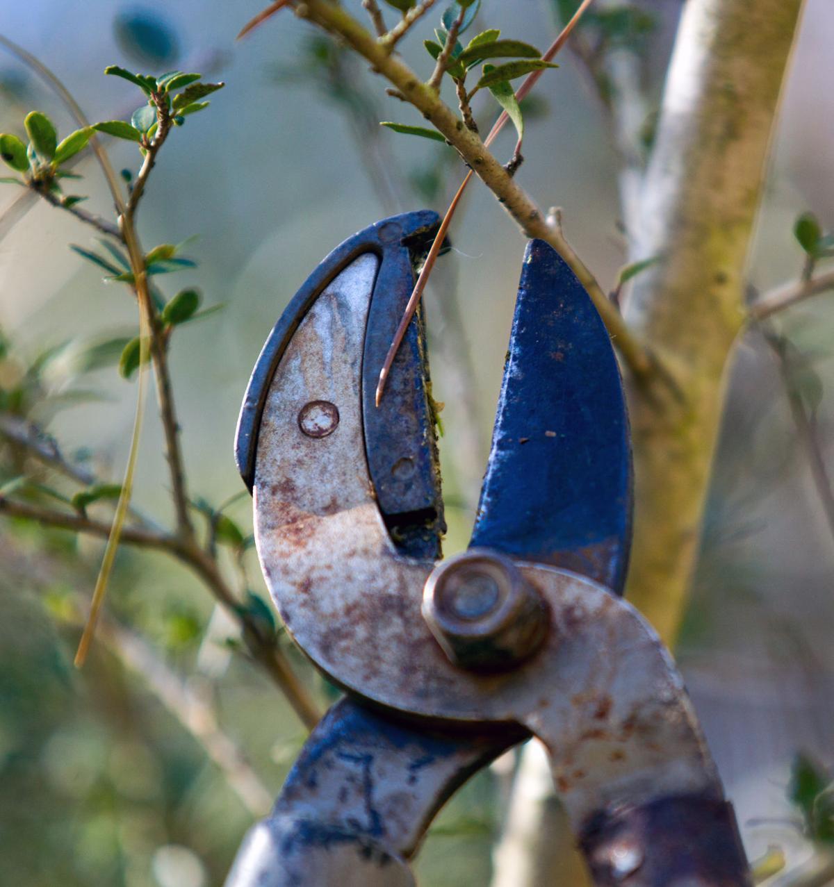 pruning (copy)