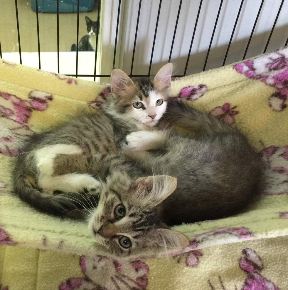 Southeast cats available for Nov. 19, 2015 _lowres