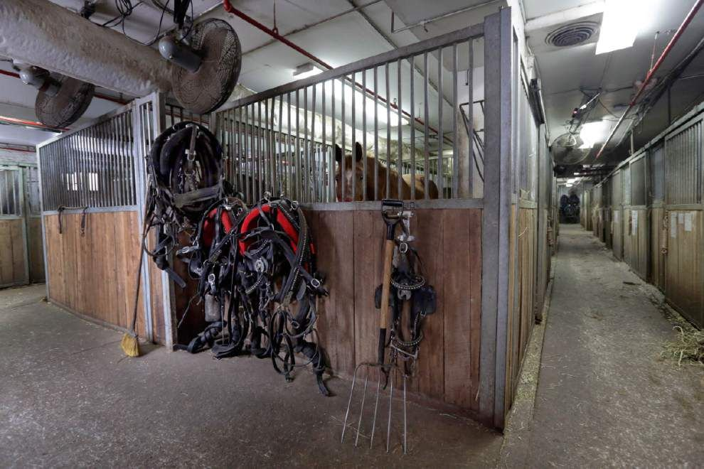 Horses' future uncertain if NYC carriage rides end _lowres