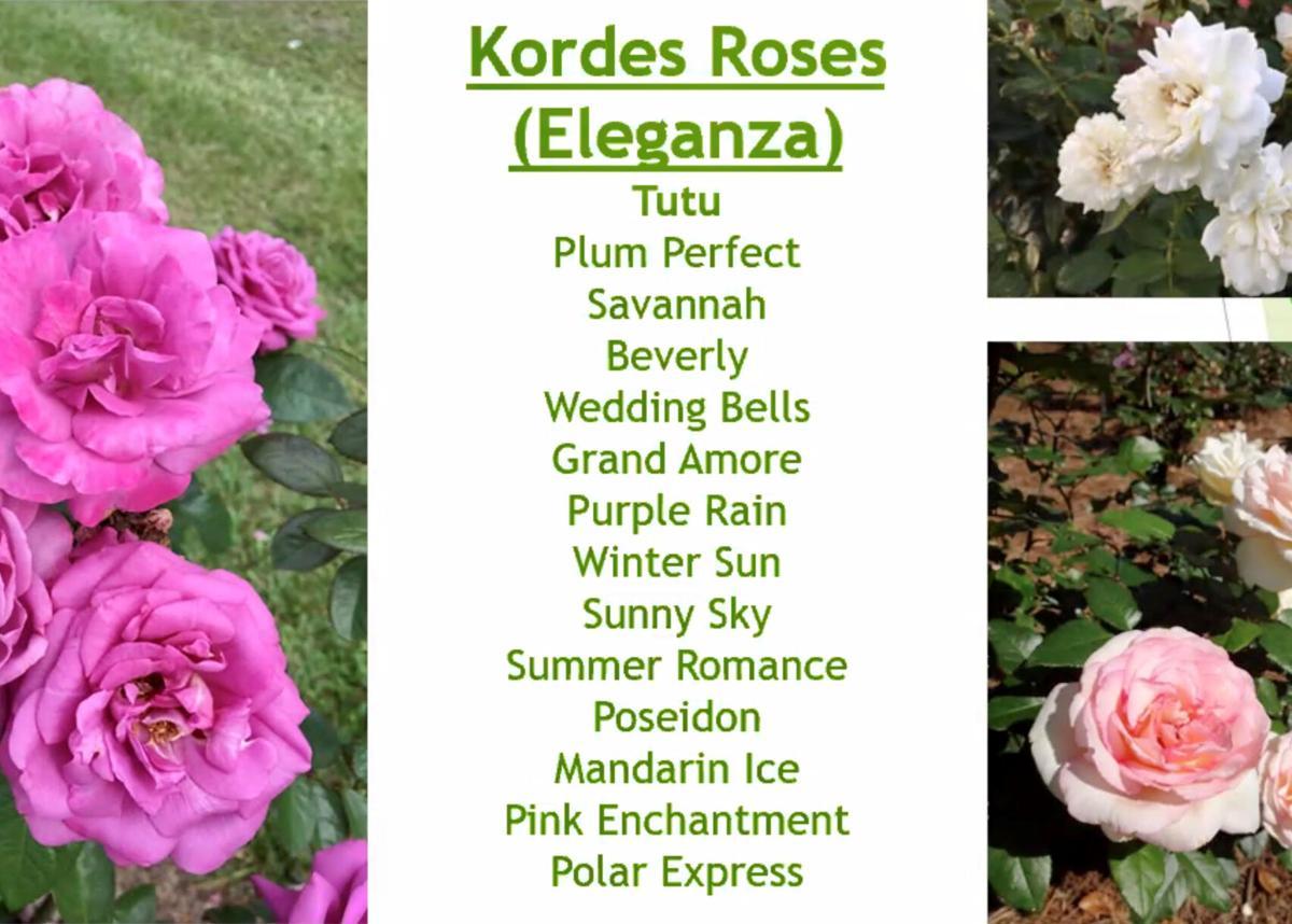 GGC - roses.jpg