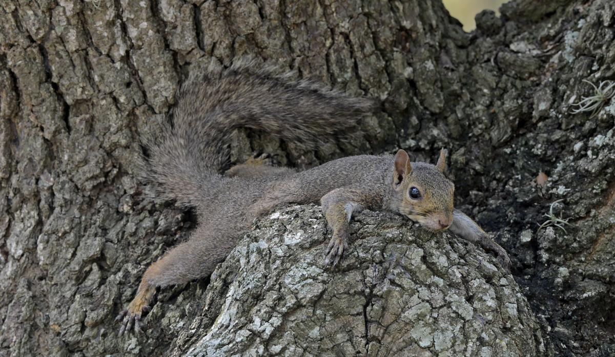 SquirrelAntics.adv HS 049.JPG