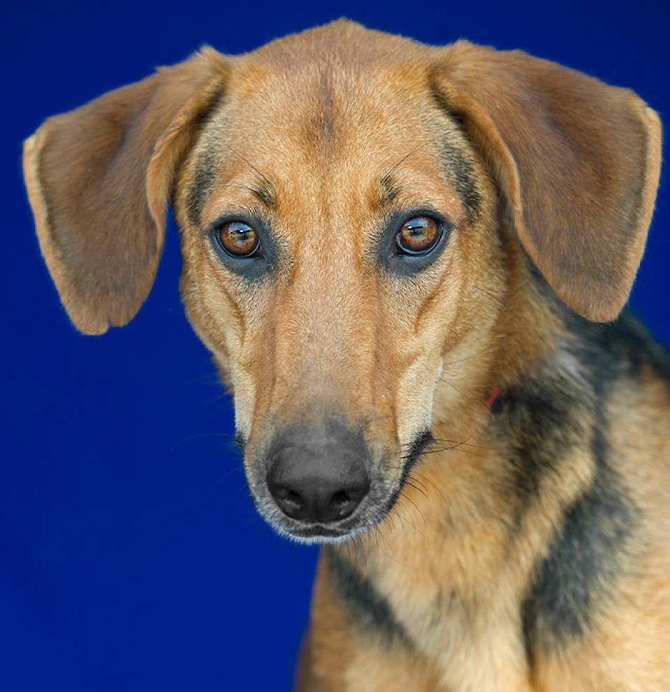 Livingston-Tangipahoa pets available for Nov. 27, 2014 _lowres