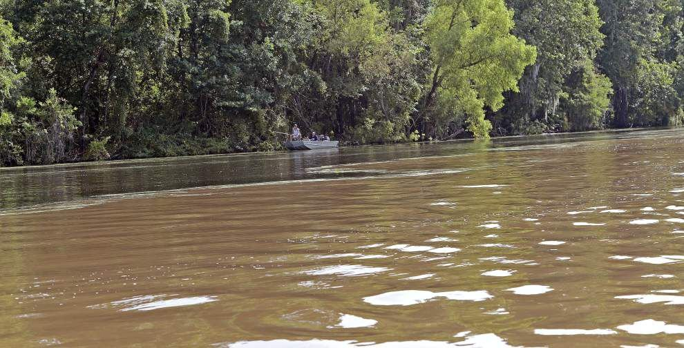 The Nature Conservancy buys Atchafalaya Basin land to improve water flow on the property and encourage research _lowres
