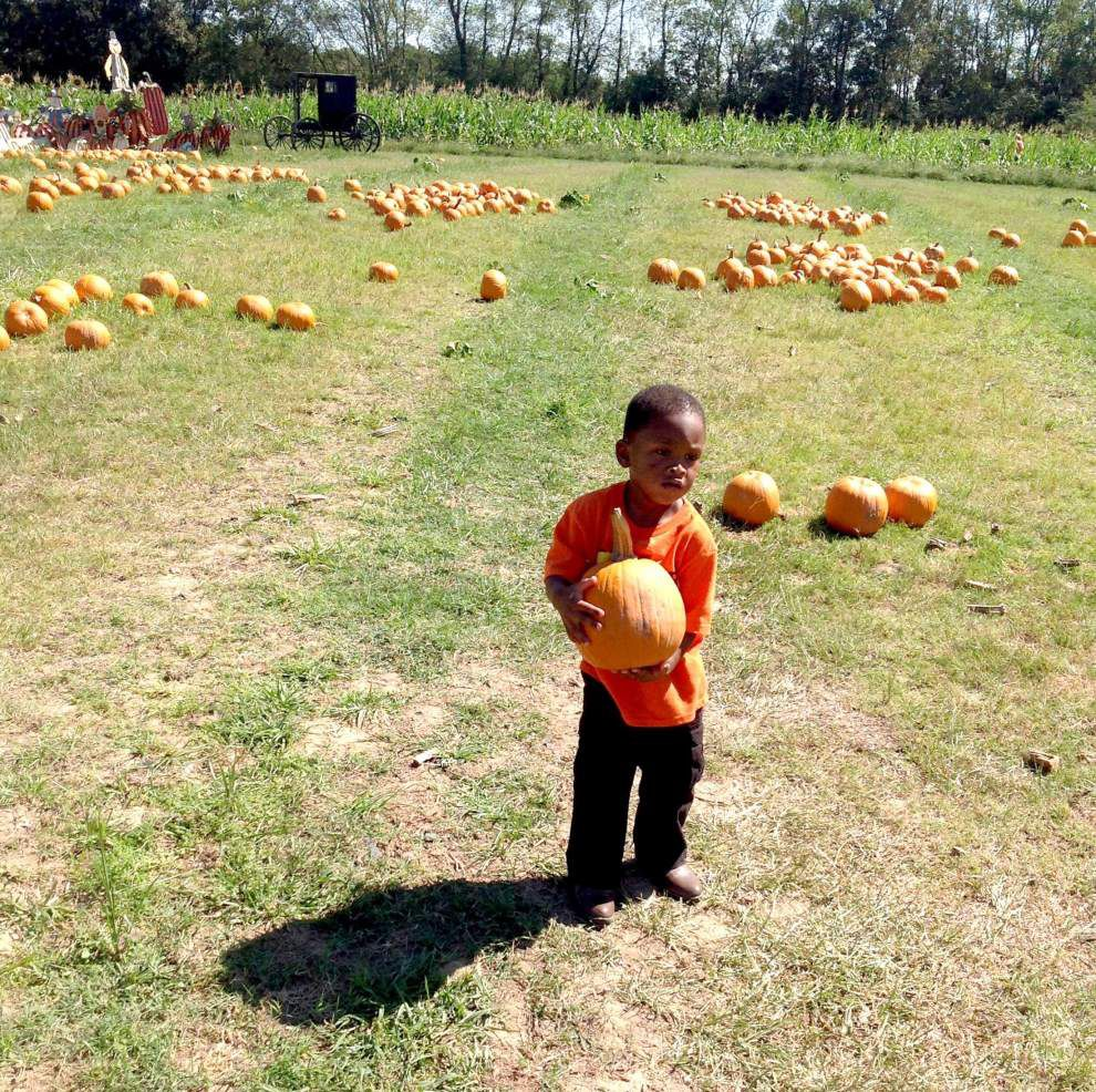 Playtime in the pumpkin patch _lowres