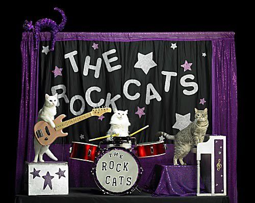 The Acro-Cats_lowres