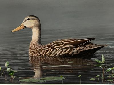 2021-Duck-Stamp-winner.jpg