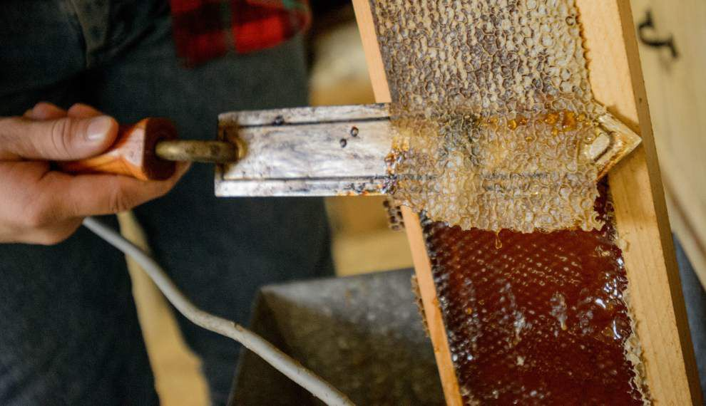 Exterminator Glenn Gueho actually is in the business of saving honeybees _lowres