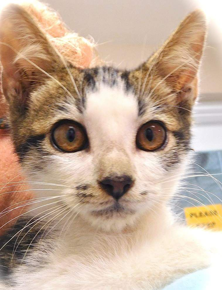 West Feliciana pets for Oct. 22, 2015 _lowres