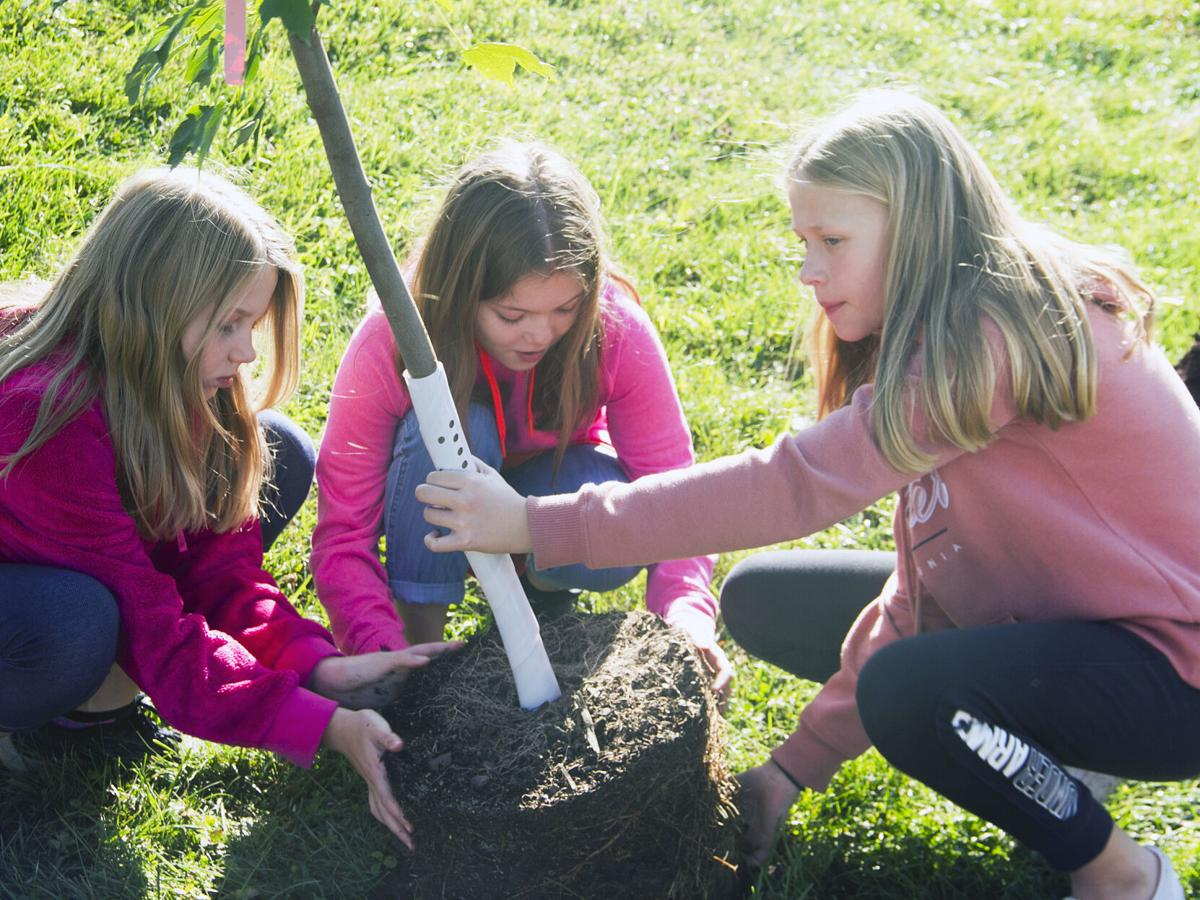 Neil Armstrong planting