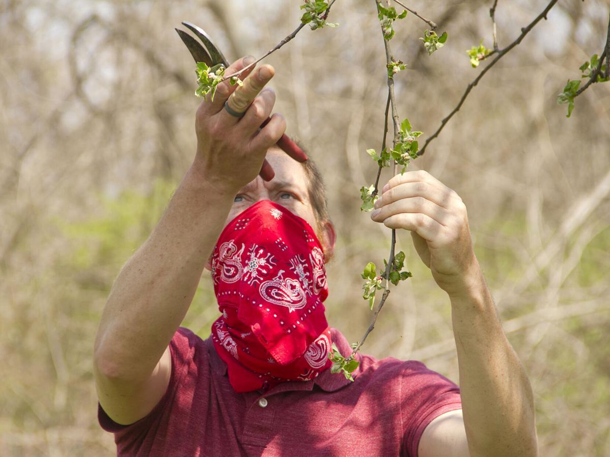 Chris tree