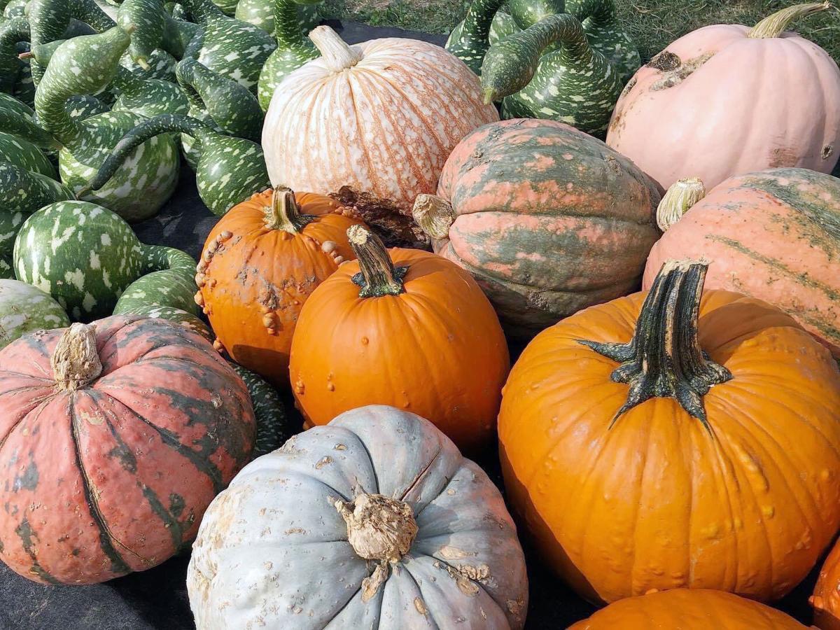 20201025_biz_be local pumpkins.JPG