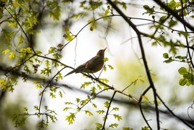 Bird in Bethel Park