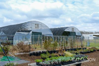 Aquatic Greens Farm