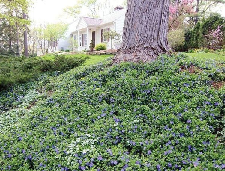 Ground covers are alternatives to grass