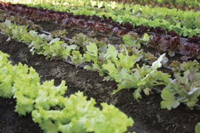 sept garden photo