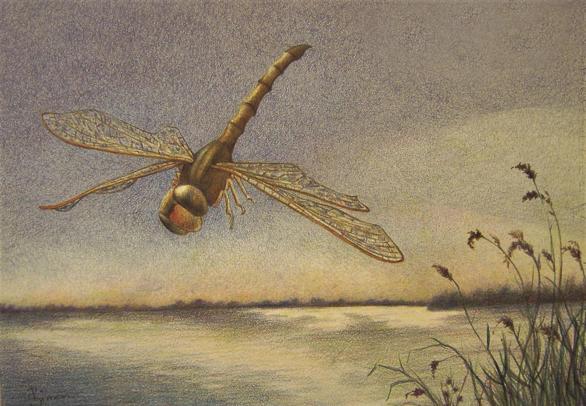 Patty Simon Dragonfly Summer