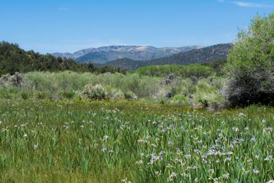 FILE - White Pine County, Nevada