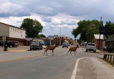 FILE - Wyoming Deer